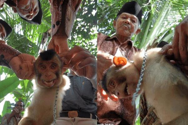 recolte noix coco